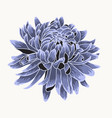 colored and lined chrysanthemum flower vector image vector image