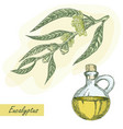 eucalyptus branch with glass jar vector image vector image