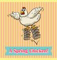 Spring chicken vector image vector image