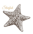 starfish hand-drawn vector image vector image