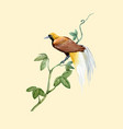watercolor paradise bird vector image vector image