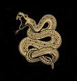 viper snake on dark background design element for vector image