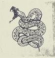 hand drawn snake on grunge background vector image