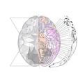 cerebral hemisphere vector image vector image