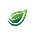 elegant leaf vector image vector image