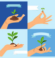 sprout or seedling vernal plant in human hand vector image