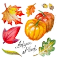 autumn pumpkinsleaves and acorns vector image vector image