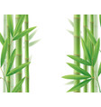 green bamboo frame with stems and leaves on white vector image