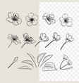 hand drawn design elements sakura flowers vector image vector image