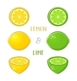 lemon and lime vector image vector image