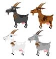 Four spotted goats grey white brown and black vector image