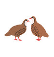 pair quails isolated on white background vector image vector image