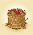 retro basket grapes vector image vector image