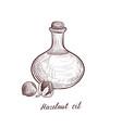 drawing hazelnut oil vector image vector image