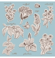 Herbs collection on tags in sketch style vector image vector image
