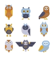 Owl wild bird cartoon