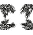 tropical black and white palm leaves on four sides vector image vector image