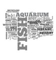aquarium fish food tips text word cloud concept vector image vector image