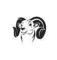 bighorn ram head on white background vector image vector image