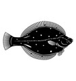 european plaice fish black and white vector image vector image