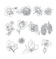 flower set isolated on white background vector image vector image