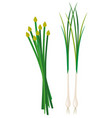 green onion and kuicheai vector image vector image