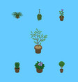 isometric houseplant set of blossom plant fern vector image