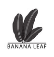 banana silhouette leaf logo vector image vector image