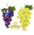 grapes realistic isolated bunch 3d detailed vector image vector image