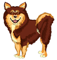dog lapphund breed smiling vector image vector image