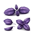 Set of Red Purple Basil Leaves Isolated Background vector image vector image
