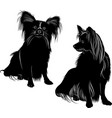 dog breed papillon butter vector image vector image