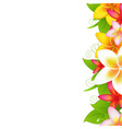 Garland From Plumeria vector image vector image
