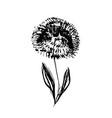 textured hand drawn black ink dandelion flower vector image vector image