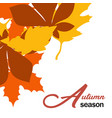 autumn season maple leaves fall design imag vector image vector image