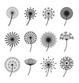dandelions signs black thin line icon set vector image