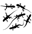 Lizard Silhouette vector image vector image