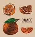 digital detailed color orange hand drawn vector image