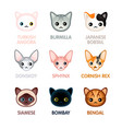 cute cat icons set i vector image