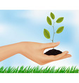 hand with plant vector image vector image