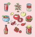 tomato juicy tomatoes food sauce ketchup vector image vector image