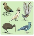 set of australian birds engraved hand drawn vector image