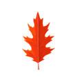 autumn maple leaf cartoon isolated icon vector image