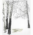 birch background sketch line watercolor tree vector image vector image