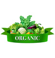 Fresh vegetables with banner vector image vector image