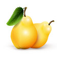 two yellow pears isolated on white background vector image vector image