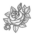 vintage sketch rose or hand drawn flower vector image