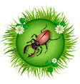 beetle in a clearing vector image vector image