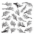 dry tree branches set environment dead and old vector image vector image