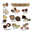 nuts type hand drawn collection nuts vector image